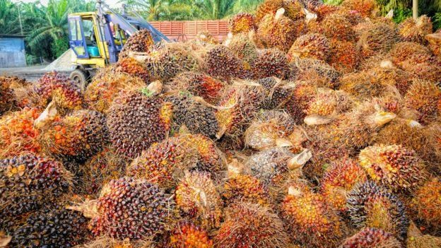 Palm oil industry in the doldrums